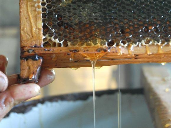 cuba miel abejas