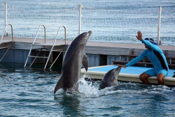 delfinario Cayo guillermo 580x386