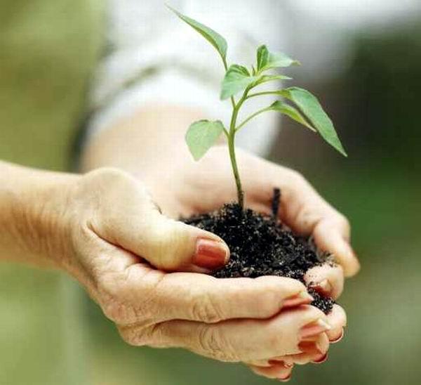 reforestacion siembra arboles