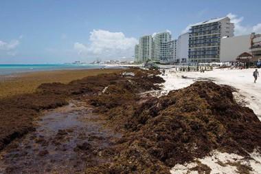 Alerta en el Caribe ante invasión masiva de algas en sus playas