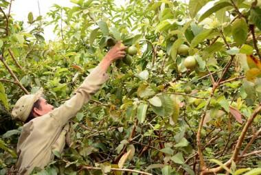 Agricultores cubanos