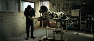 """La multipremiada """"Dogman"""" se exhibe en el Festival Internacional del Nuevo Cine Latinoamericano de La Habana."""