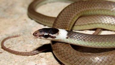 Confirman nueva especie de serpiente en Cuba